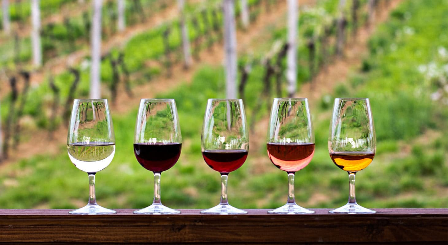 A row of wine glasses at Fenton Herriott Vineyards