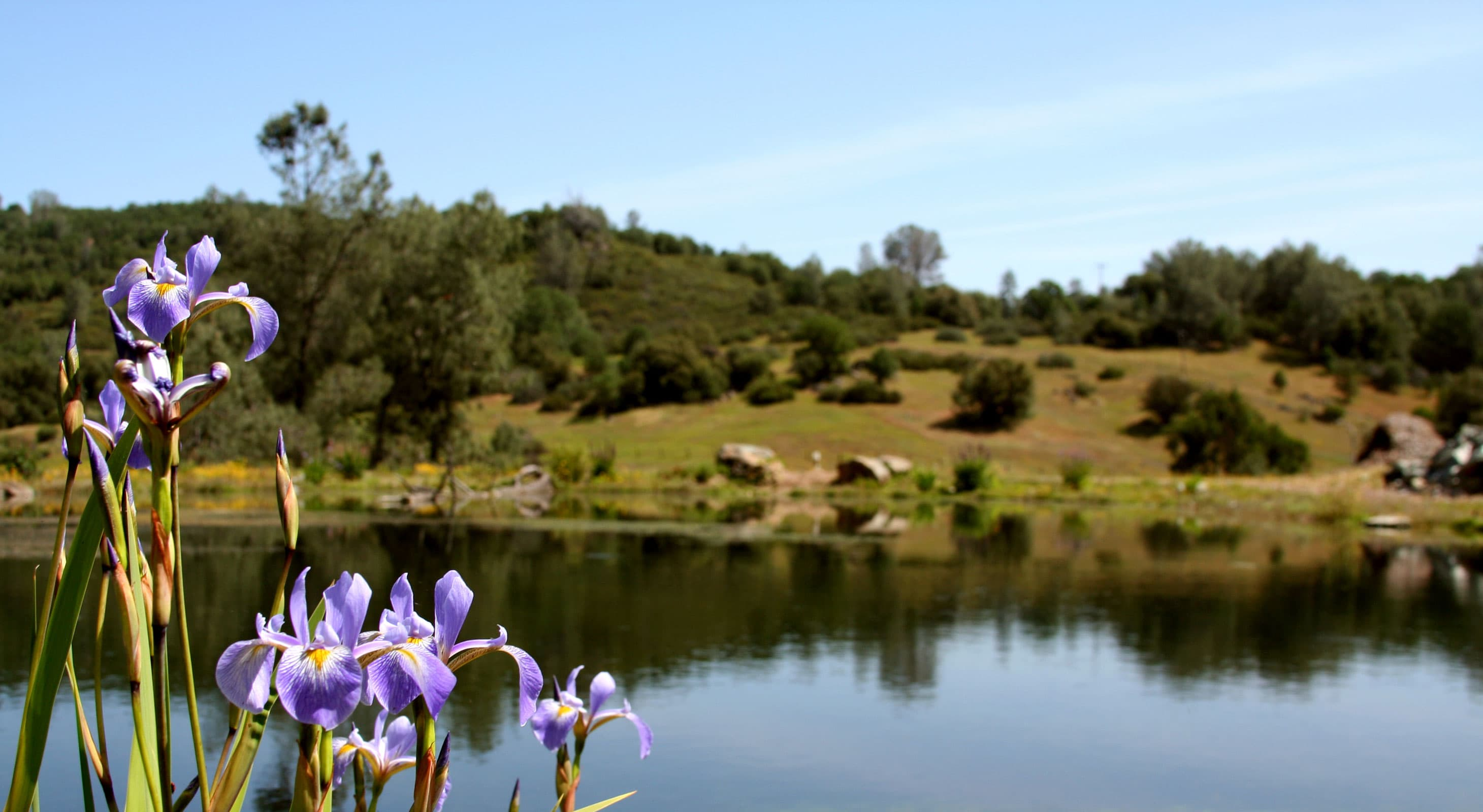 Purple flowers blooming in front of scenic, sunny lake