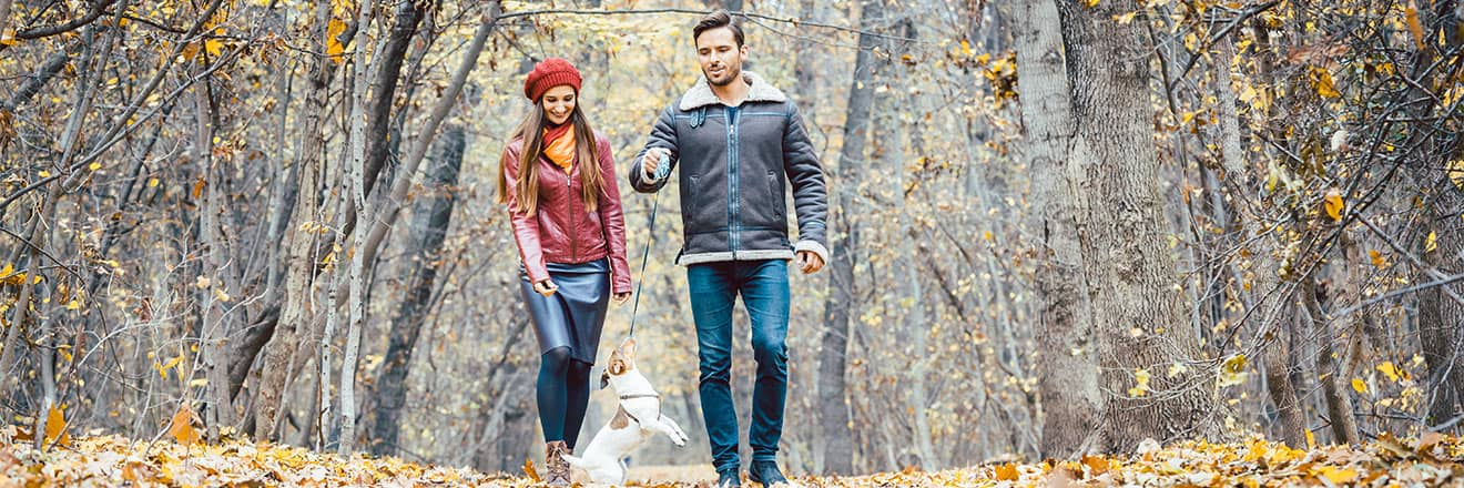Couple walking a small dog in fall