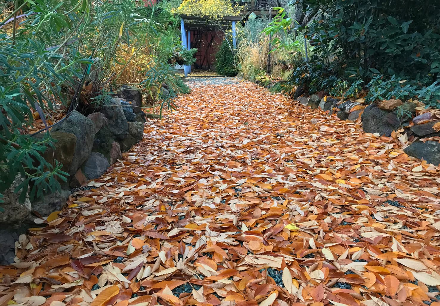 Fall leaves on a pathway