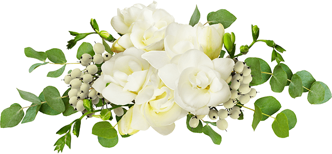 white freesia flowers